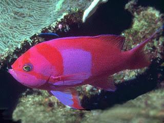 blue neon fish