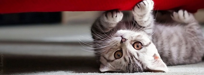 Download image Cute Cat Facebook Timeline Covers PC, Android, iPhone ...
