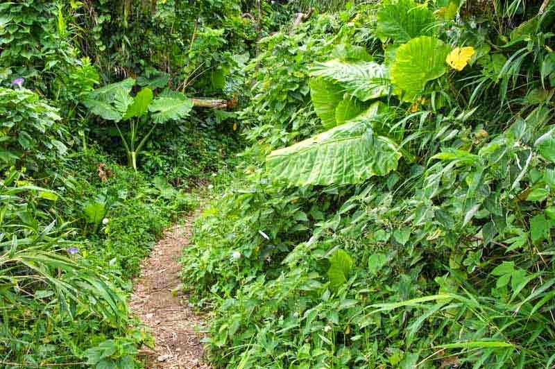 trail, jungle