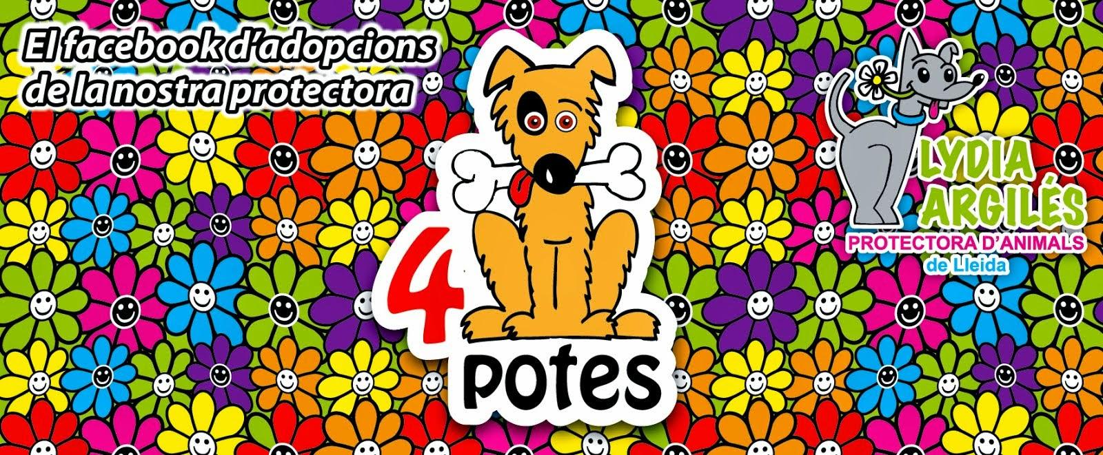 4 POTES