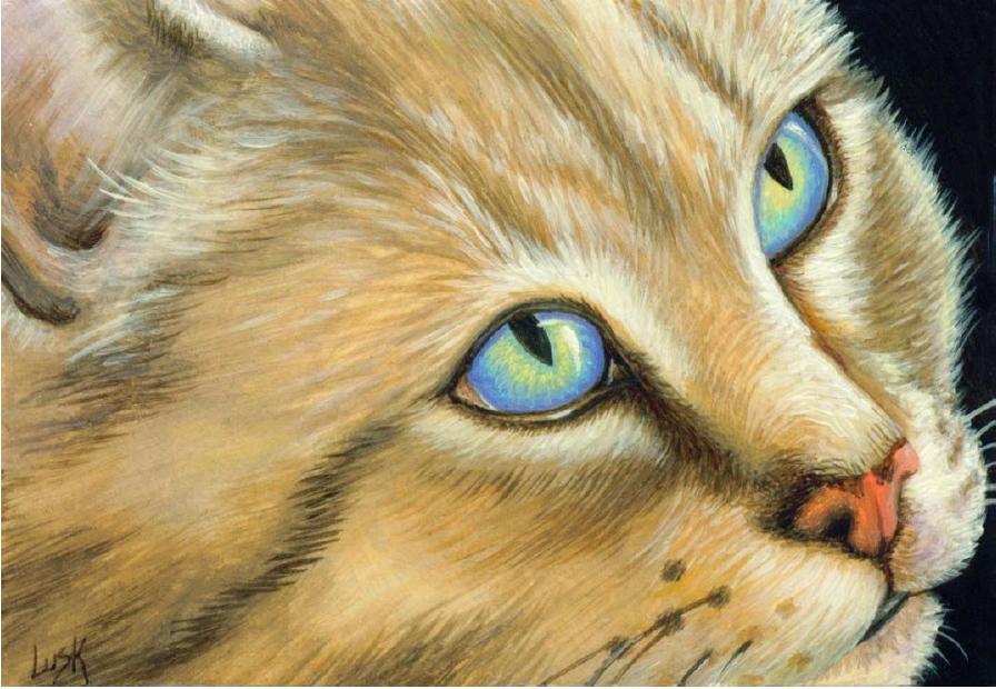 У кошки 9 жизней  Зооблогру