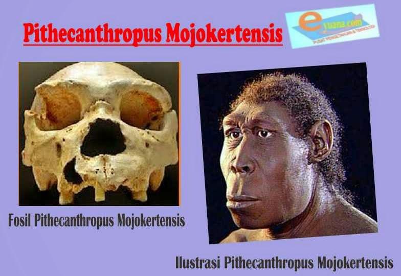 Gambar Manusia Purba Pithecanthropus Mojokertensis