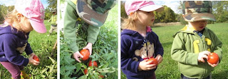 Maximilian and Artemis picking Tomatoes from our Garden