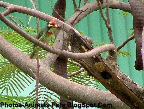 http://4.bp.blogspot.com/-D-KhSVlBWqQ/Tet3hlowGUI/AAAAAAAABPo/17azroxv_Ow/s1600/woodpeckers_0001.JPG