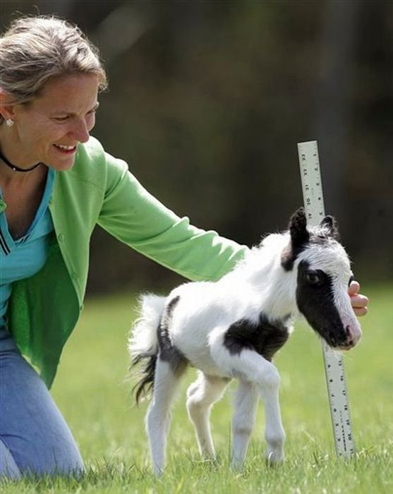 The World's Most Smallest Horse Images Seen On www.coolpicturegallery.us