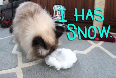 goma has snow