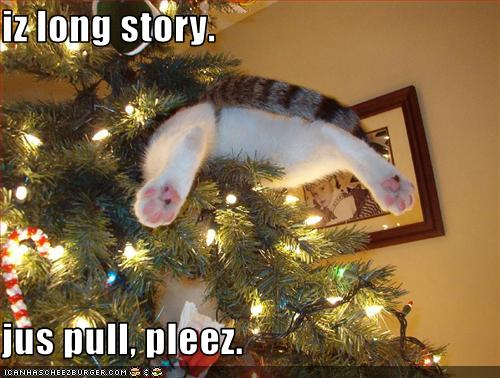 Funny wallpapers HD wallpapers: funny christmas cats