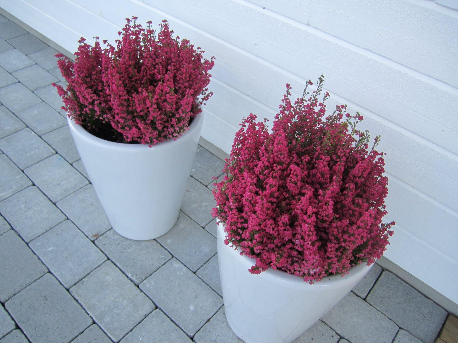blommor utomhus vinter