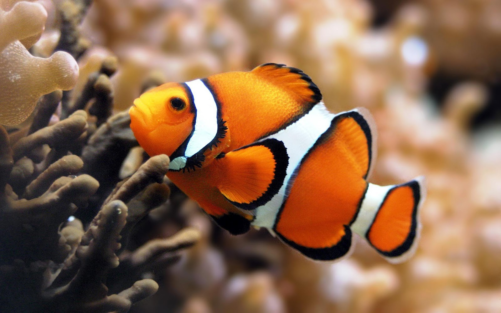 Unique wallpaper exotic fish wallpaper hd for Peces de acuario