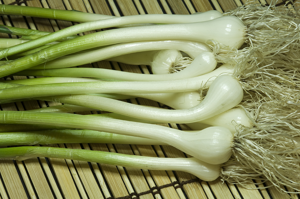 all about plant field garlic or yard onions identified