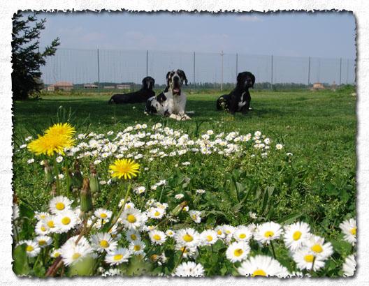 Animali e natura vivere in armonia con gli animali for Giardino e cani