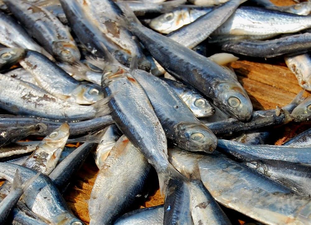 ikan asin terkenal cilacap