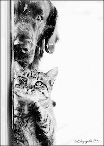 Tinbie and Salander ♥
