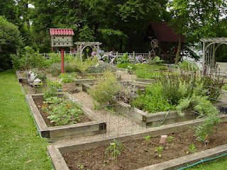 Beautiful raised beds at an urban homestead in Pittsburgh