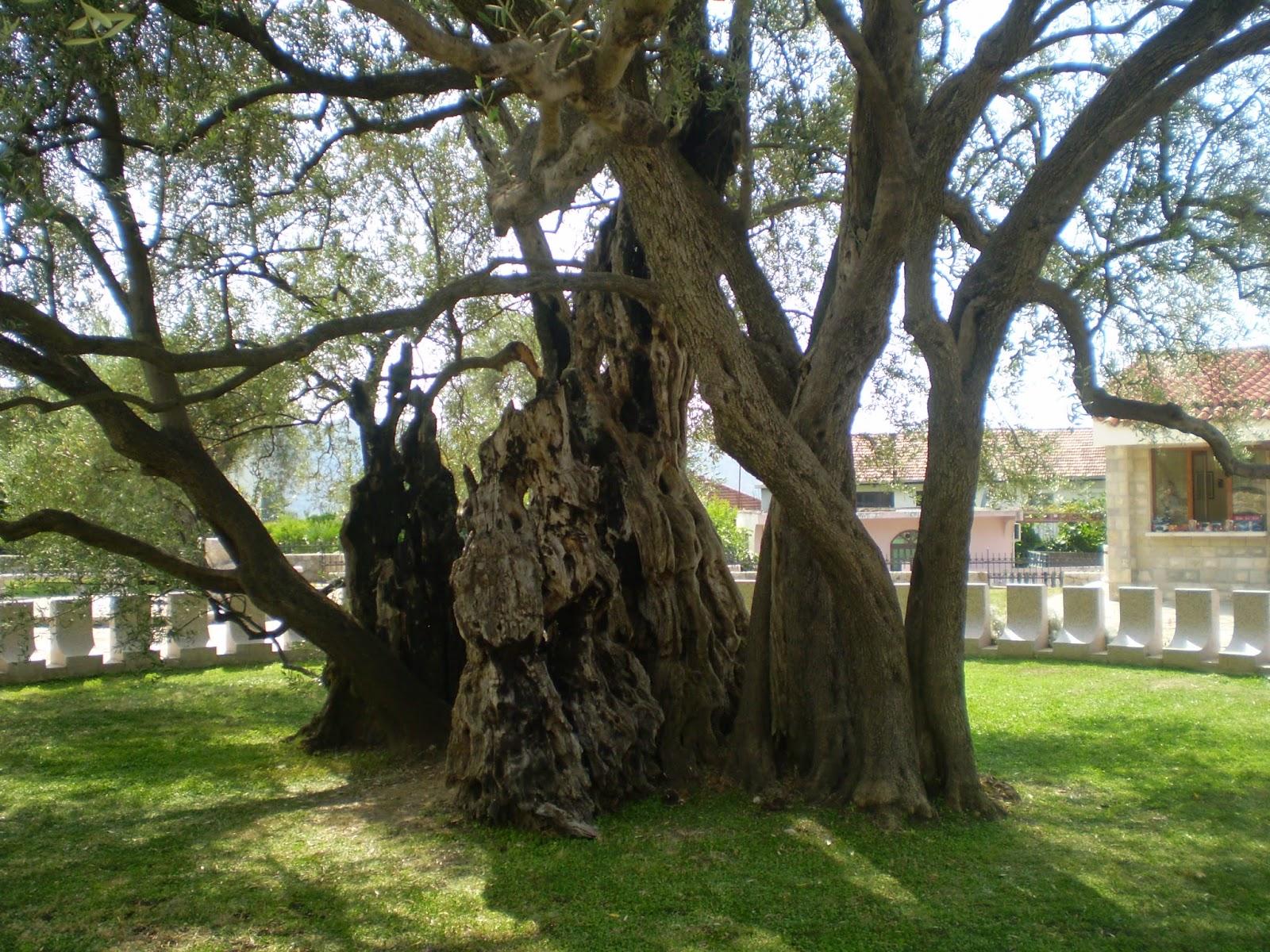 Old-Olive-Tree-Bar