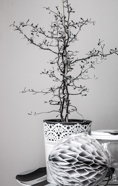 Zickzackstrauch, Wabenball, schwarz weiss Fotografie, Dekoration