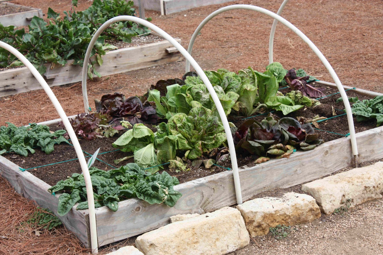 Musings From The Texas Hill Country Square Foot Gardening