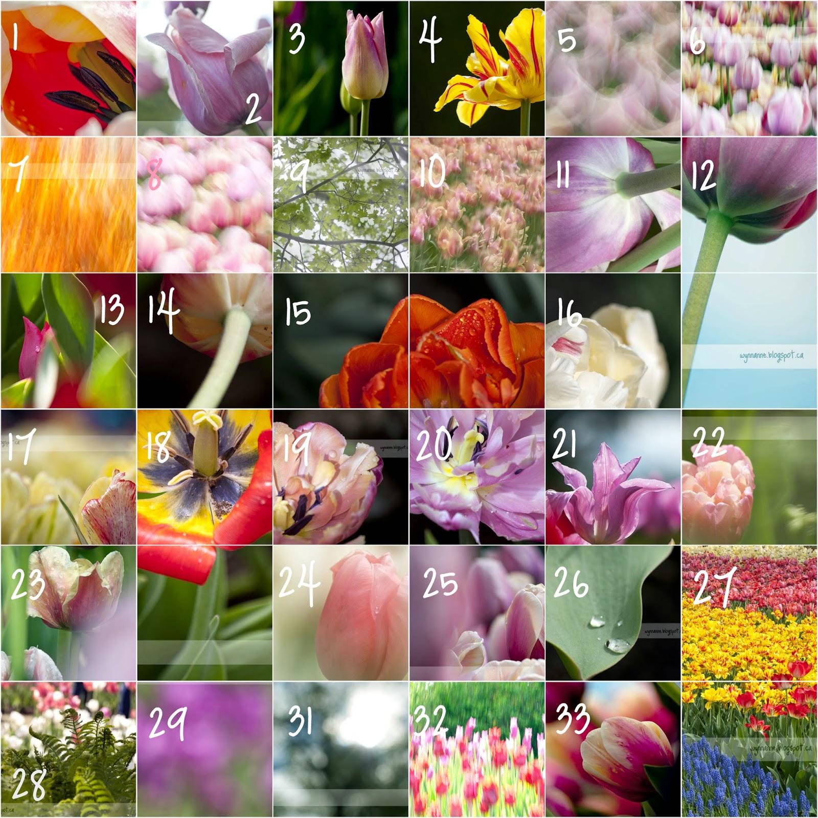 Fine Art Flower Photography | Wynn Anne's Meanderings