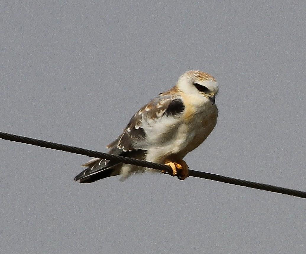 Birding Poole Harbour & Beyond: 16 Jan 14 - The Grey & Brown Of Gujarat