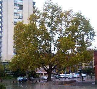 Plaça del lleó. Encants de Girona.