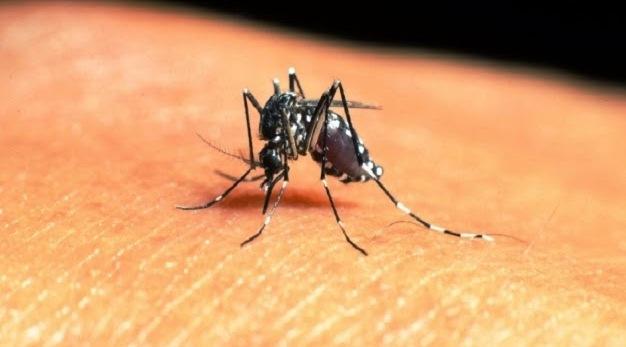 Cara Cepat Menghilangkan Bekas Gigitan Nyamuk