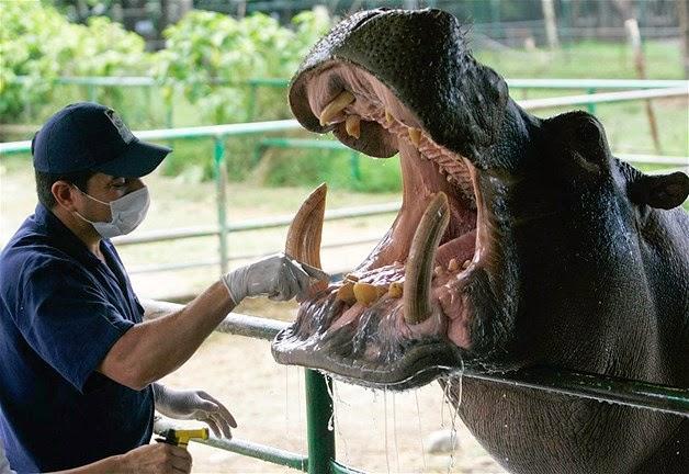 animales visitando al veterinario