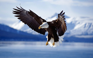 download original eagle wallpaper for ipad 2013