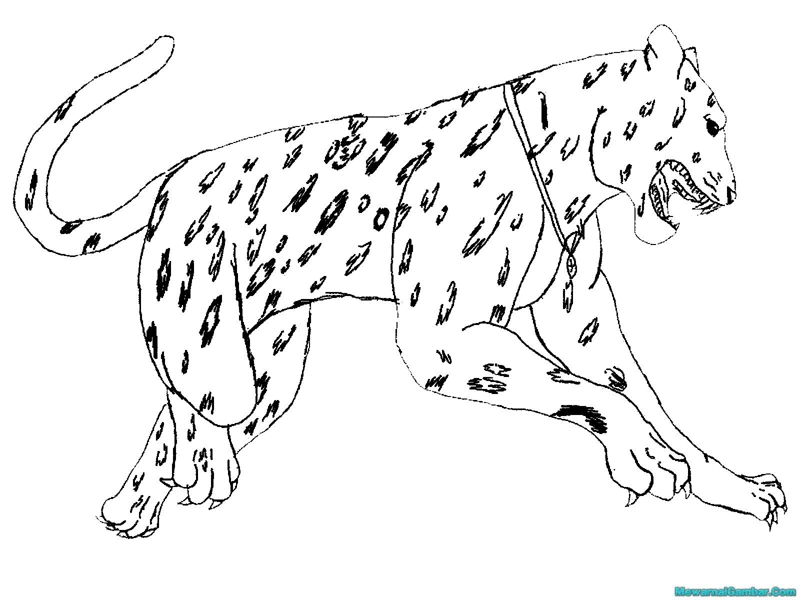 онлайн раскраска животных