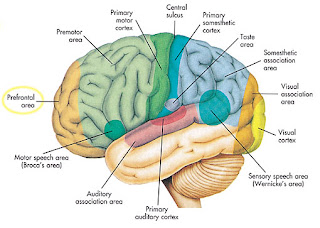 Gejala Umum Kanker Otak, Ciri-ciri Bila Terkena Gejala Kanker Otak [ www.BlogApaAja.com ]