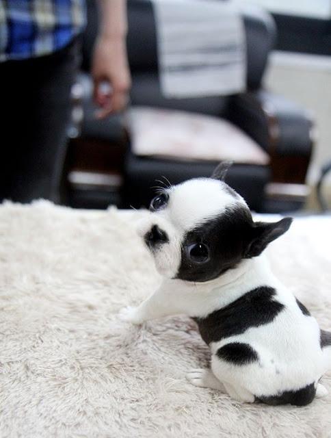 Cún con dễ thương