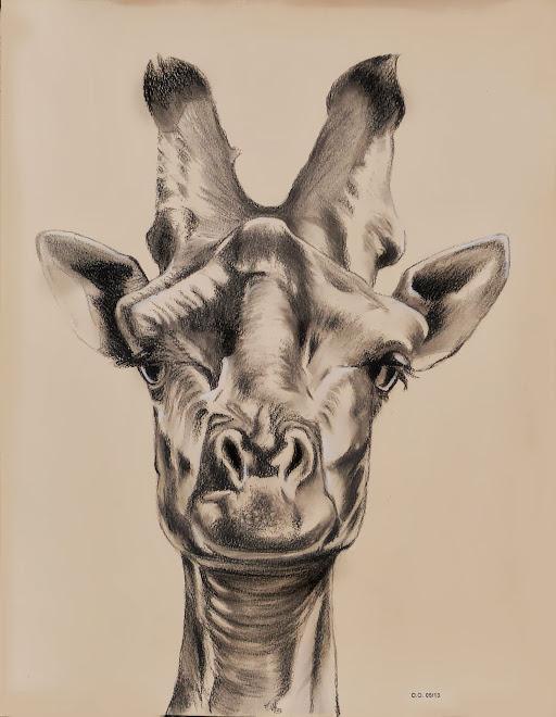 Ma girafe (2013)