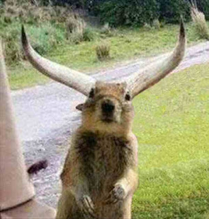 squirrel with horns