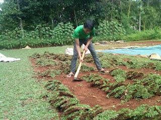 Proses Pengambilan Rumput