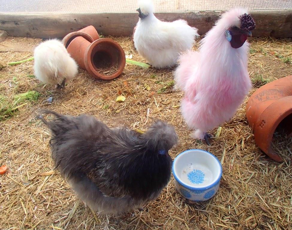 poule soie rose