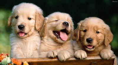 3 Dog Breeds