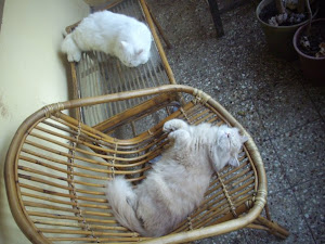 """A Typical """"Cat Nap"""" at home."""
