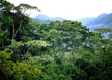 Se esfuma la masa boscosa de América Central