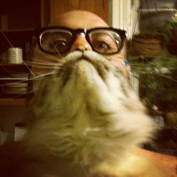 feline craze on internet