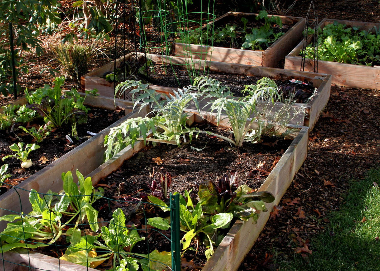 Beautiful Home Vegetable Gardens Viewing Gallery