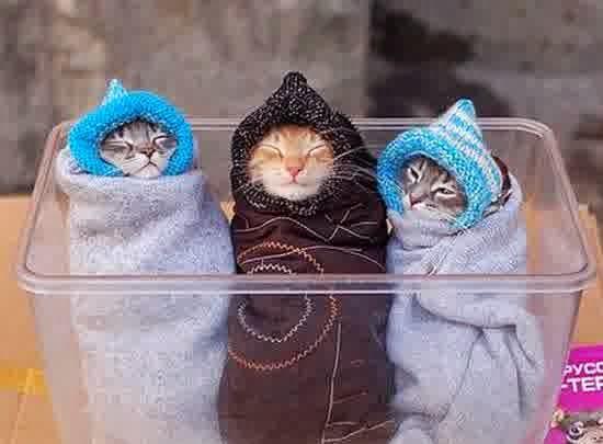 Kekebalan Kucing dan Daya Tahan Terhadap Penyakit