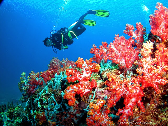 Diving Sites in Miri