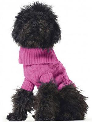 Benetton ropa para mascotas