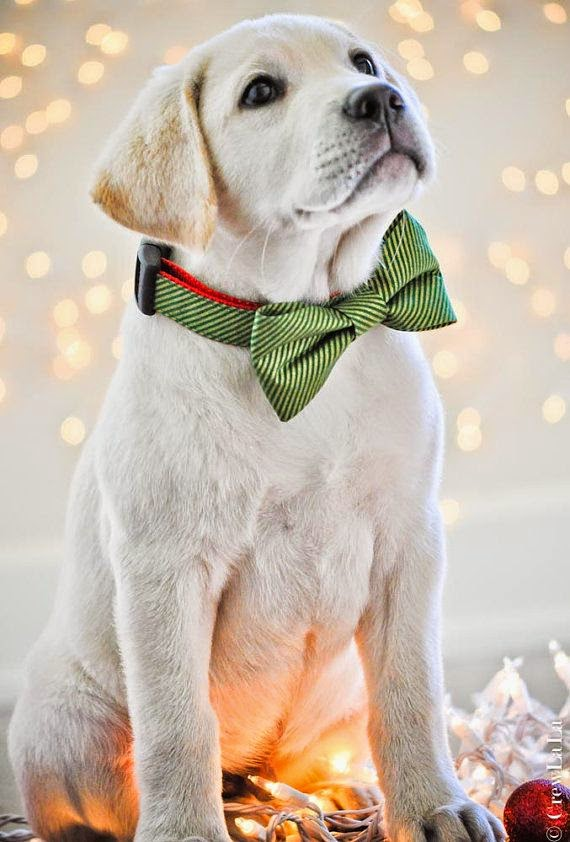 I just found my own dog on Pintrest - and I didn't put him there!