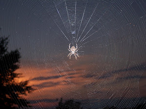 Spider Webs and Sunsets
