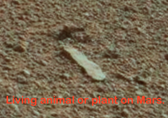 Worm Creature Discovered By NASA's Mars Rover, UFO Sightings