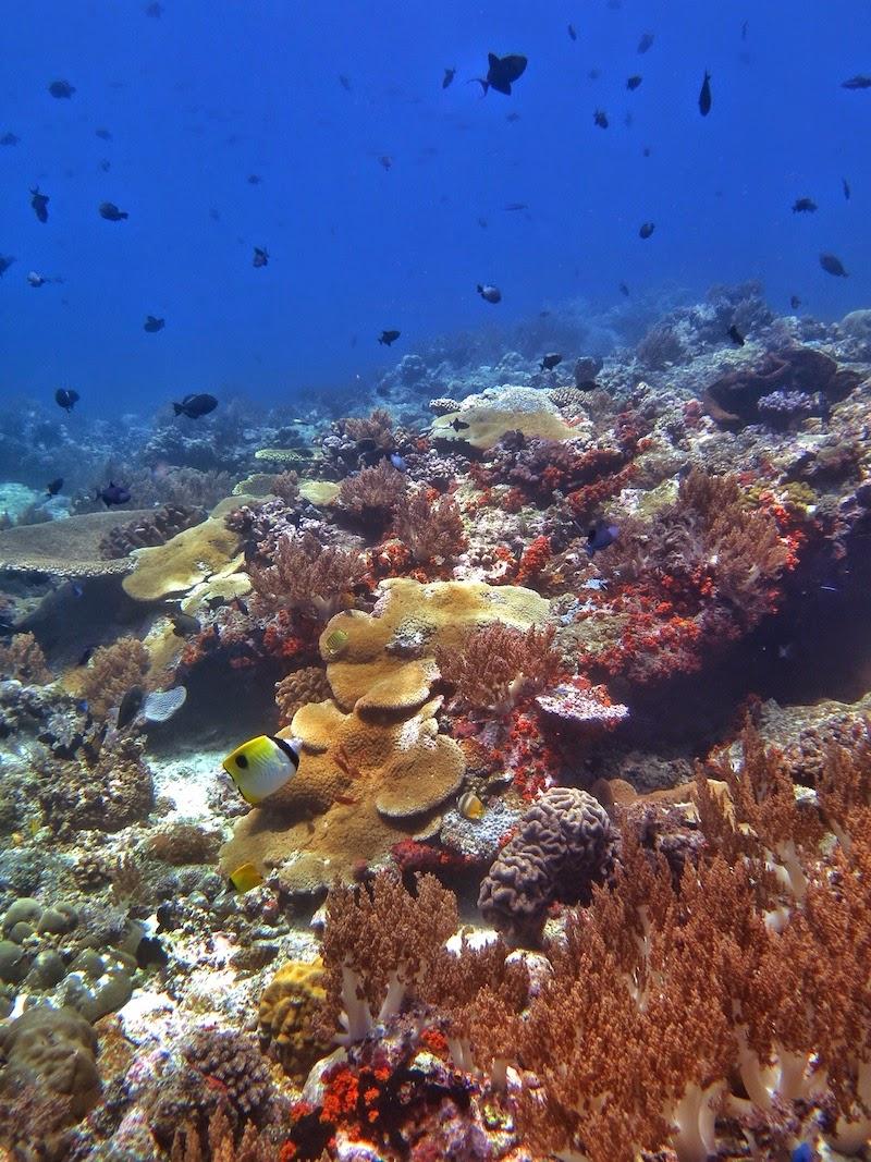 "<a href=""http://mataram.info/things-to-do-in-bali/visitindonesia-banda-marine-life-the-paradise-of-diving-topographic-point-inward-fundamental-maluku/"">Indonesia</a>best destinations : Banda Naira Photograph Story: Diving Batu Perahu"