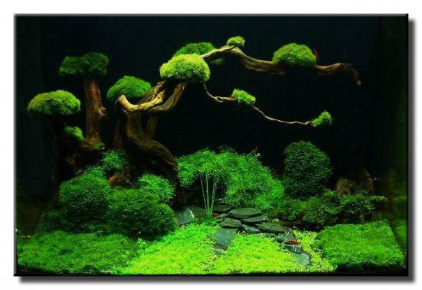 The beauty of underwater aquascape keindahan alam dalam aquarium - Gambar aquascape ...