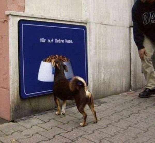 Dogs Fails Funniest Photos | Funniest Dogs Photos Seen On www.coolpicturegallery.us
