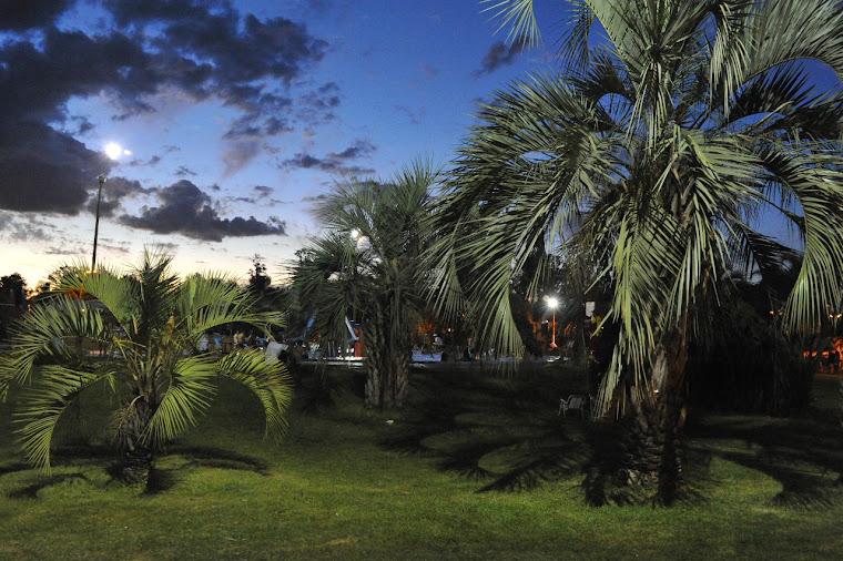 de palmeras y enjardinados...