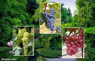 gambar Beragam manfaat buah anggur